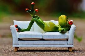frog-1073427_960_720.jpg