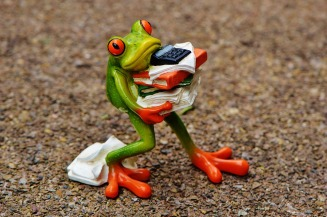 frog-1339892_960_720