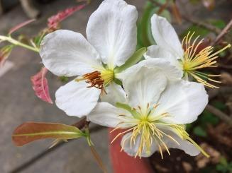flower-2379716_960_720